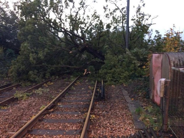 UK storm: Falling trees cause havoc on railways and London Underground as services remain cancelled