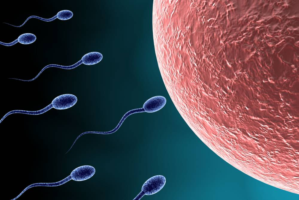 DIY instant male fertility test on sale at Boots