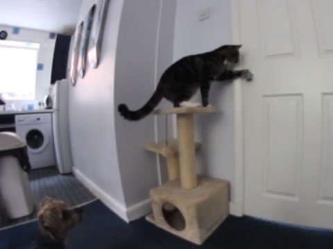 Video: Cat and dog in daring escape from kitchen