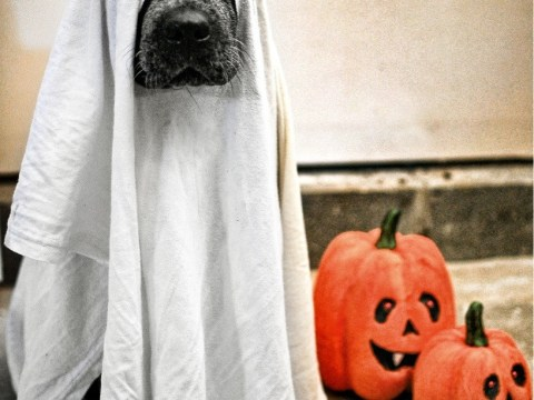 9 genuinely terrifying Halloween dog costumes