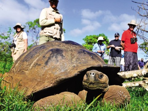 Top 5 things to know about the Galapagos Islands, including steam train Tren Crucero