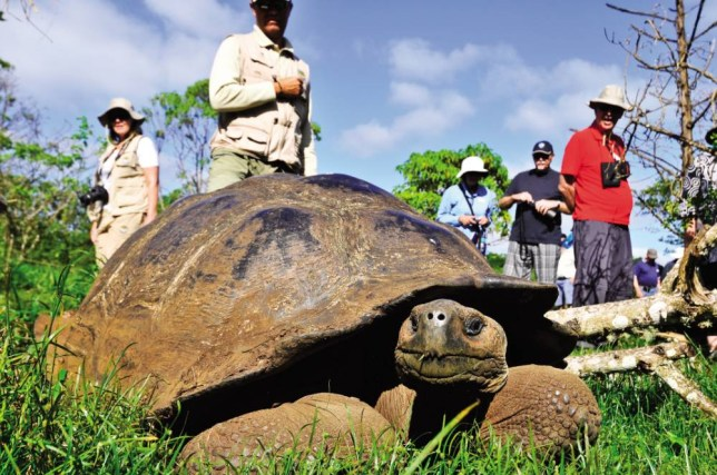 See unique animal life on the Galapagos Islands (Picture: Silversea Cruises)