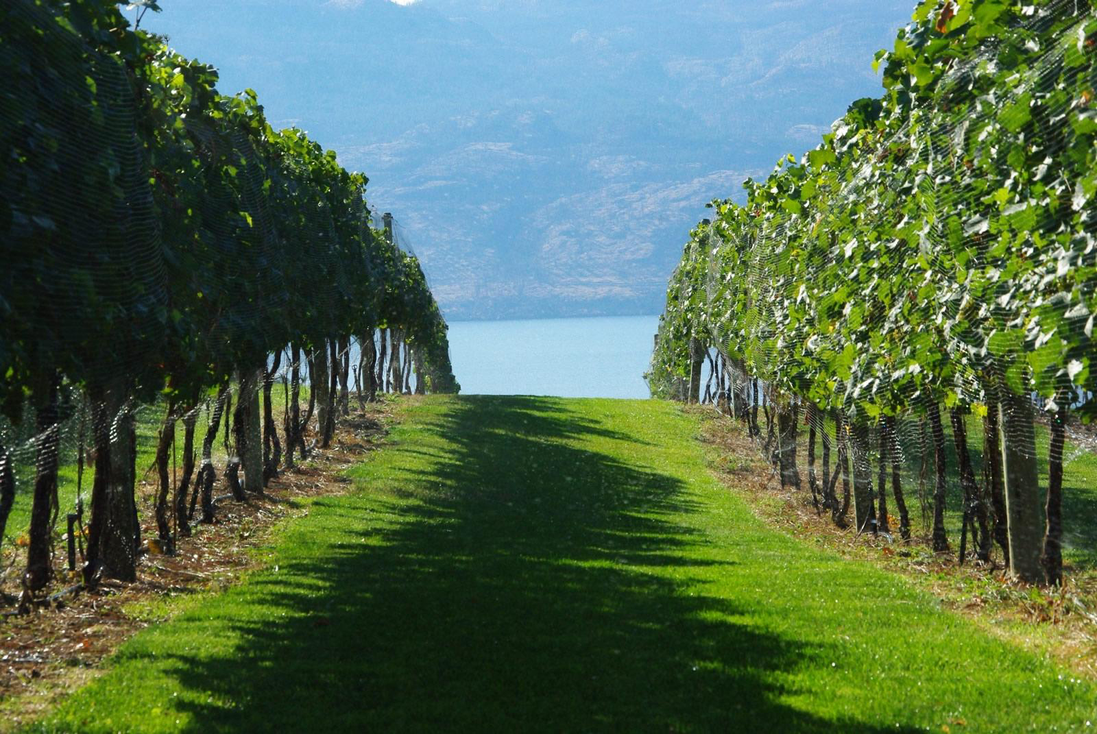 From Canada to Kent, vineyard holidays in the new world of wine producing