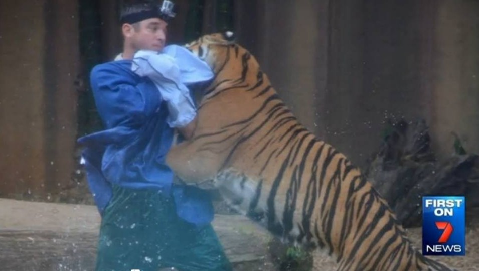 David Styles, tiger