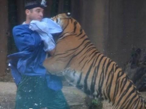 Tiger mauls handler during performance at Australian zoo