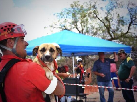 Relief as dog trapped in world's largest man-made hole rescued after eight days