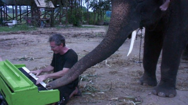 I nose how this tune goes: Elephant uses trunk to tinkle the ivories during impromptu duet with pianist
