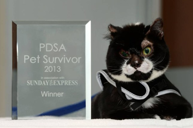 Badly burnt cat wins pet survivor of the year award after horrific accident