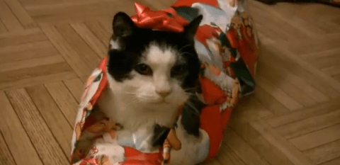 7 lessons cats need to learn to survive the festive season