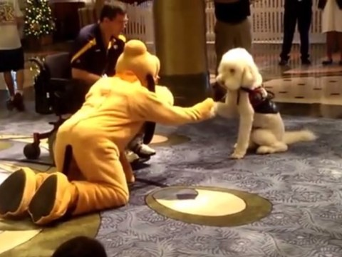 Is this the cutest friendship ever? Guide dog meets Pluto on Disney cruise