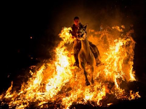 Gallery: Horses run through fire at the Luminarias festival 2014