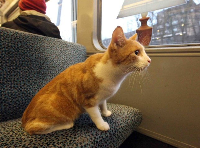 The happy commiaowter: Train-trotting tabby takes six-week Metro meander using his get-out claws