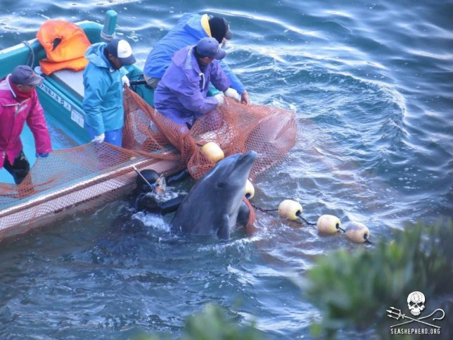 Japan defends dolphin killing after US ambassador's criticism