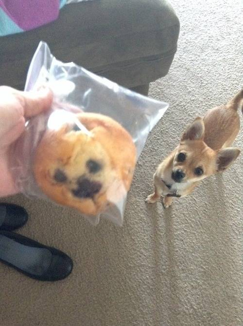 Kaelin Bell - dog muffin.  link back to  http://hatesful.tumblr.com/post/74003742505/my-blueberry-muffin-looks-exactly-like-my-dog-im