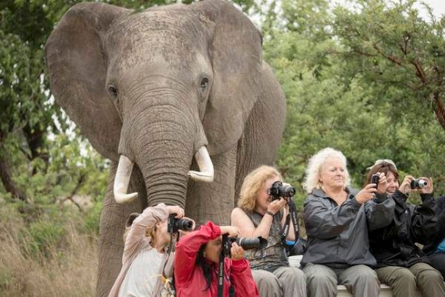 Framed: The elephant joins the photobombing craze (Picture: Barcroft)