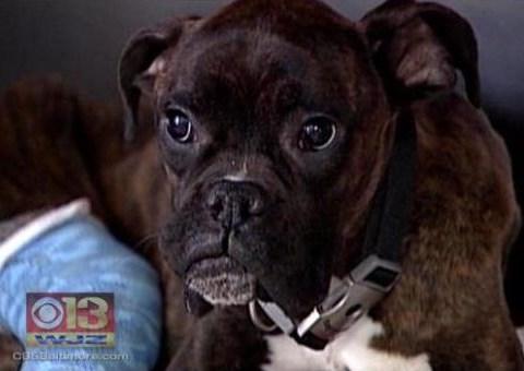 Lost dog survives nine days in polar vortex; gets hit by car