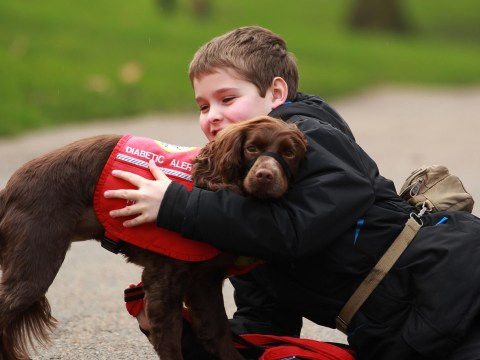 Gallery: Crufts dog hero competition finalists announced