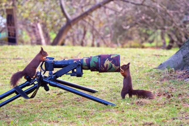 Peter Smith: Cheeky red squirrels are absolutely nuts about photography