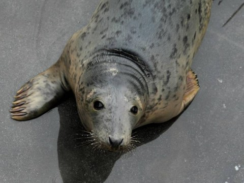 Sealnado? Well, they are at least cuter than sharks… Storms wash sea creatures ashore