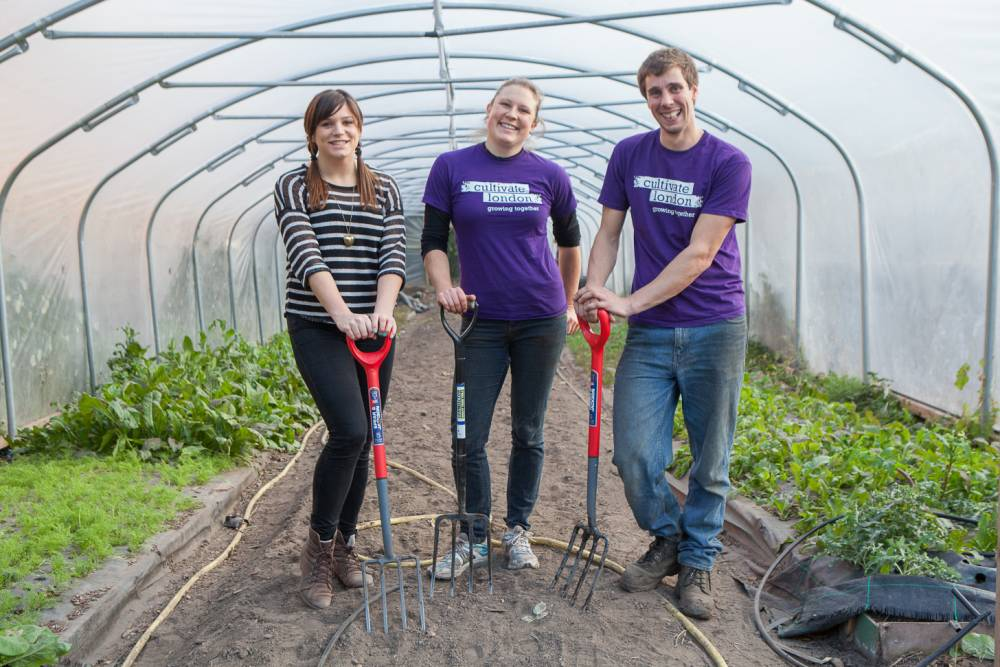 Getting her hands dirty: Amy joins Cultivate London general manager Adrienne Attorp and head grower Ben Simpkins at an urban farm in Hounslow, West London, a formerly derelict area turned over to food (Picture: Victor Frankowski)