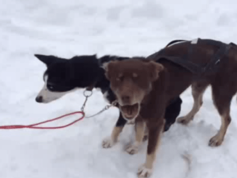 'Blah blah' dog really doesn't care what you're talking about