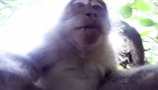 Bali: Cheeky monkey steals GoPro for selfie