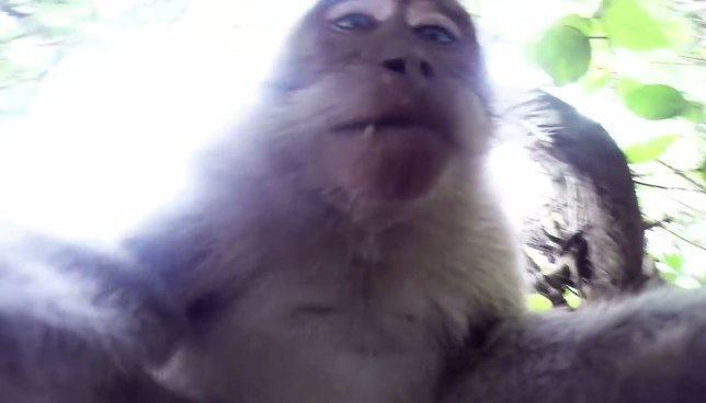 Top 10 viral videos of the week: Sleepy commuter to monkey selfie