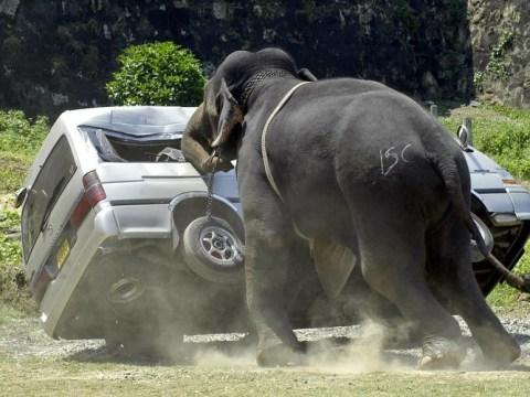 Gallery: When animals attack