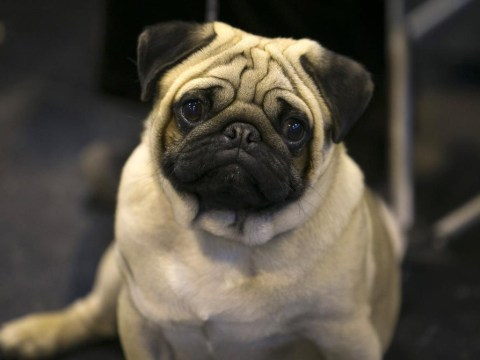 13 of the cutest dogs from Crufts