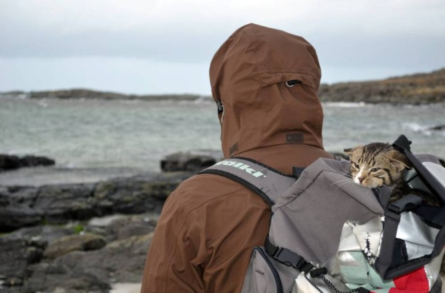 Higgs the kitten shelters from the adverse weather in his owner Christian Wittes rucksack while on a walk at Sanna Bay in the Highlands
