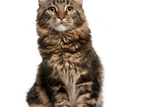 Mewberculosis: Medical first as cats are found to pass TB on to their owners