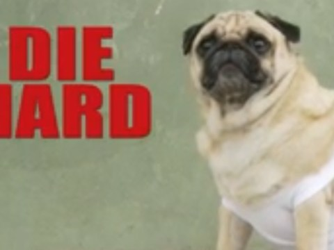 Die Hard gets inevitably adorable remake with vest-clad pug replacing Bruce Willis