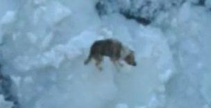 Dog on ice Baltic