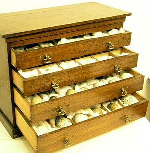 chest of drawers containing 100-year-old birds' eggs