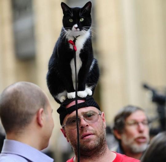 Cat man of Manhattan