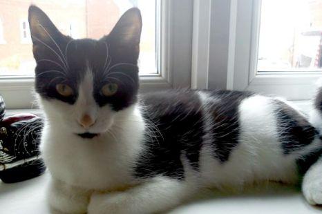 Healthy kitten Tammy was put down by mistake (Picture: Newsteam)