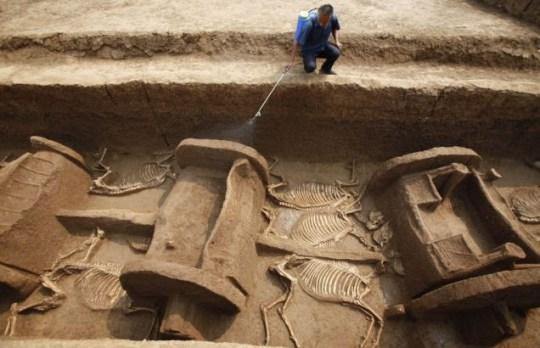 Horse remains, Luoyang, China