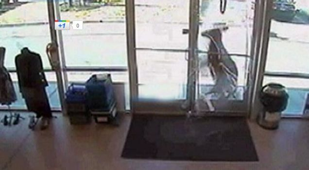 Deer caught on CCTV crashing into shop
