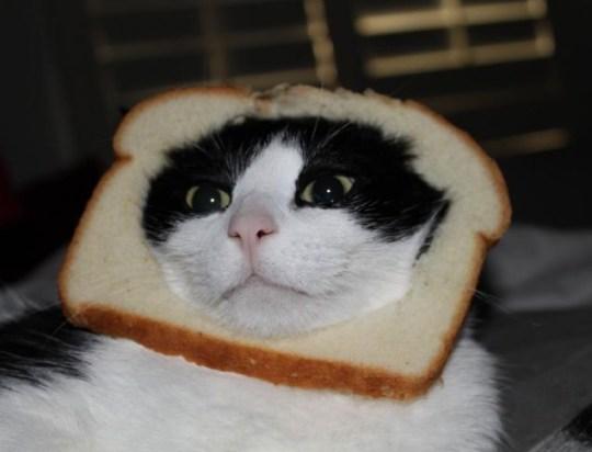Breading