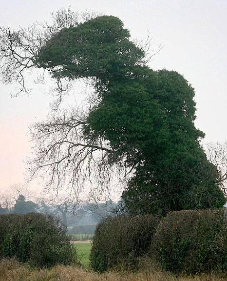 Dinosaur, tree, t-rex