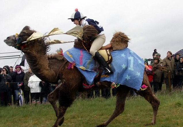 Marks Tey, Essex Easter Race