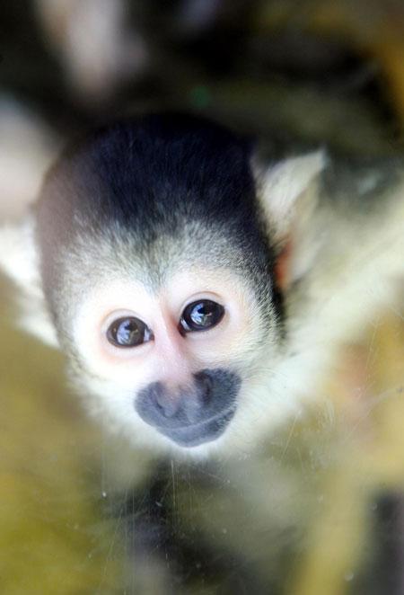 Monkey attack 'helped catch thief' | Metro News