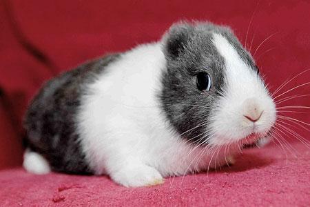 Earless rabbit