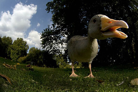 Yorkshire bird flu: Duck farm cordoned off as officials prepare mass slaughter