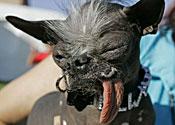 Elwood the ugly dog