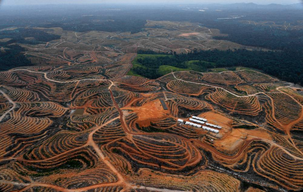 The dark truth behind the creation of palm oil and the impact on the environment