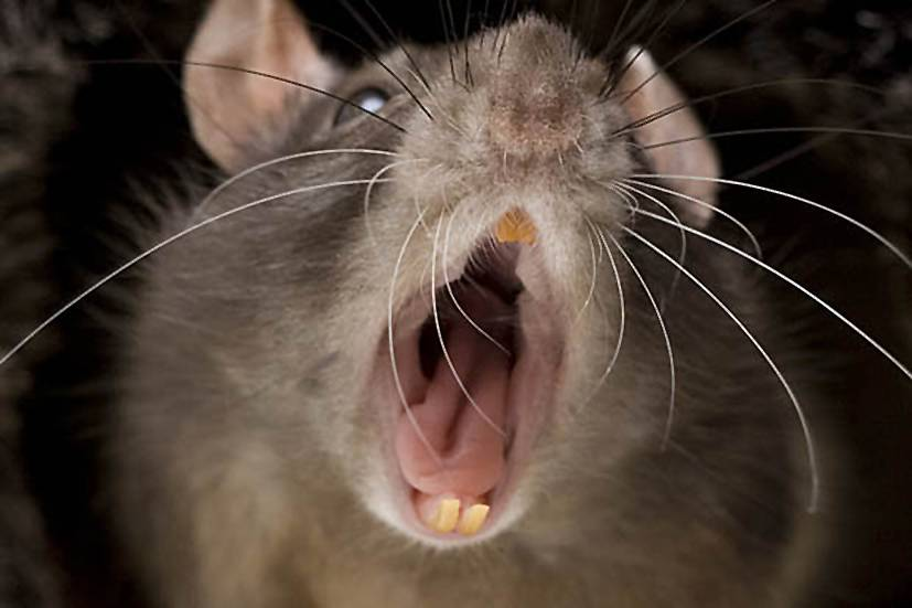 Baby dies after 'rats chew off her face' while mum goes to party