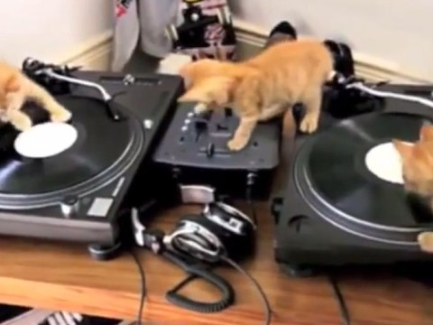 Beats by kittens: These three young cats fancy themselves as DJs