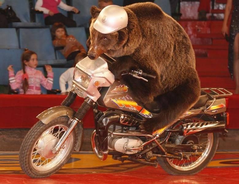 A brown bear rides a motorbike during a show in a circus in the Siberian city of Krasnoyarsk, November 22, 2009. REUTERS/Ilya Naymushin (RUSSIA ANIMALS SOCIETY) - RTXR0GE