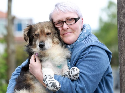 Stray dog who had his front legs deliberately chopped off is rescued by pub landlady